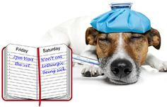 Useful dog info on pinterest your dog dog owners and Can a dog tell if another dog is sick
