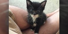 """A couple found a tiny kitten crying outside on a rainy day. The little feline was just a few weeks old and needed a lot of help. """"Gave my whole paycheck to the animal hospital to save his guy. Worth it.""""Meet Morrie!         Rachael @peaceluvpenny         It was a Tuesday evening a couple of weeks ag..."""