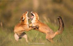 De vechtende zusters......