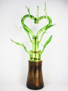 I love this beautiful - Live Heart Shape 6 Style Lucky Bamboo Plant Arrangement w/ Tall Glass Vase by 9GreenBox.com, $12.99 from Amazon