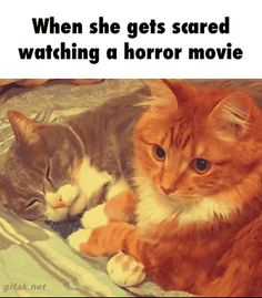 7 Best Cat Gifs of the Week - February 2016 - We Love Cats and Kittens Funny Animal Pictures, Cute Funny Animals, Funny Cute, Funniest Animals, Cute Kittens, Cats And Kittens, Cats Bus, Siamese Cats, Pets