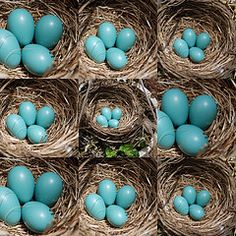 All different blue eggs.