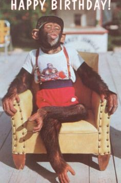 Happy Birthday Dressed Chimp in Armchair - Happy Birthday Funny - Funny Birthday meme - - Art Print: Happy Birthday Dressed Chimp in Armchair : The post Happy Birthday Dressed Chimp in Armchair appeared first on Gag Dad. Birthday Posts, Happy Birthday Messages, Happy Birthday Funny, Happy Birthday Quotes, Happy Birthday Images, Happy Birthday Greetings, 19th Birthday, Birthday Memes, Birthday Cake