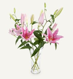 Brighten up your home or office space with a bunch of fresh cut flowers. Browse our beautiful flowers online to find your favourite bunch. Earth Tone Colors, Earth Tones, Oriental Lily, Orange Blossom, Unique Colors, Fragrance Oil, Mother Day Gifts, Flower Arrangements, Glass Vase
