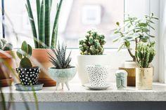 Cute plant pots and succulents.