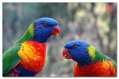 Image result for close up images of colorful birds