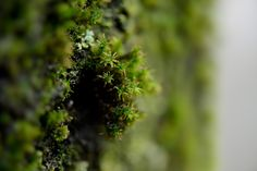 October Moss - This is part of what winter in Vancouver can look like.