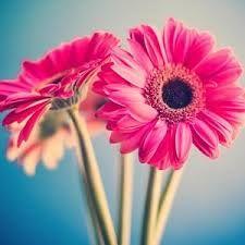 Image result for best wallpaper buket bunga