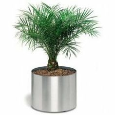 """Stainless steel planter on wheels - 14.25"""" x 13.5"""""""