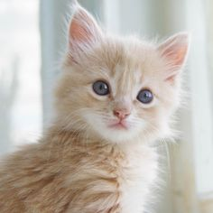 Cute Kitten Click to see more funny cats