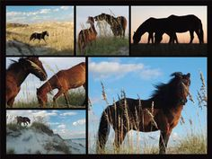 Peter Duran Wild Horses Jigsaw Puzzle | ChickSaddlery.com