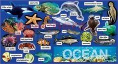 Nice list of ocean theme ideas