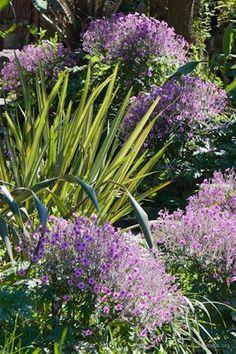 Giardini La Mortella - Geranium maderense