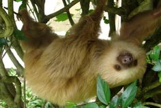 10 Reasons Why Sloths Are Irresistibly Adorable