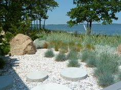 Mahogany quahog clam shells from Massachusetts cover the sand in this Shelter Island garden. A band of Elijah Blue fescue near the house blends into blue dune grass in the distance. Landscaping Sand, Front Yard Landscaping, Coastal Gardens, Beach Gardens, Blue Fescue, Shelter Island, Backyard Paradise, Ornamental Grasses, Ornamental Grass Landscape
