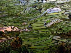 10 paisajes insólitos que parecen de otro mundo (FOTOS)  CHIARA BASSO Visitar en primavera las terrazas de Yuanyang es, sin duda, un espectáculo único para los sentidos. Estos arrozales forman la simbiosis perfecta entre la montaña, obra de la Naturaleza, y las terrazas, obra del hombre, creando un paisaje único. Se encuentran a 400 kilómetros de Kunming.