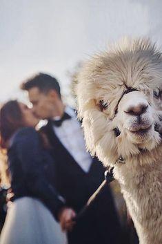 24 Creative Engagement Photo Ideas ❤️ engagement photo ideas romanric photo couple with lama ❤️ More on the blog: https://ohsoperfectproposal.com/engagement-photo-ideas/