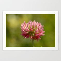 Pink Clover 5033 Art Print by metamorphosa - $22.88
