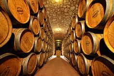 Fundada a comienzos de los 90 por la familia ARZUAGA-NAVARRO, las Bodegas que llevan su nombre son un ejemplo de dedicación y pasión por la tierra y el vino.