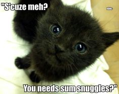 Need snuggles??