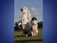 Cheval et chien
