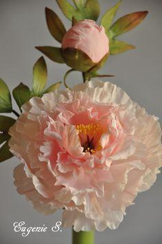 Soft peach peony by Eugeny S.