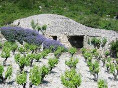 Vignes et Capitelle en Lodévois Larzac