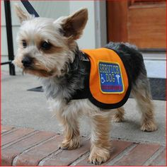 A service dog vest will simply inform the people that your dog is not merely a pet and is actually a working dog. Description from animalvests.com. I searched for this on bing.com/images