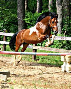 Krásny kôň ... ♥