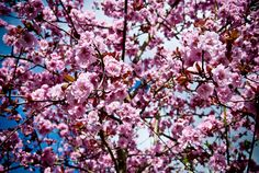 All sizes | Pink Tree | Flickr - Photo Sharing!
