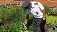 Жительницу Можги задержали за выращивание мака https://mozlife.ru/stati/kriminal-i-proisshestvija/zhitelnicu-mozhgi-zaderzhali-za-vyraschi.html  59-летняя жительница Можги задержана за незаконное выращивание мака.