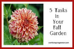 5 Tasks In Your Fall Garden – Comfort Spring Autumn Garden, Fall Season, Autumn Leaves, Weed, Garden Design, Dandelion, Spring, Flowers, Plants