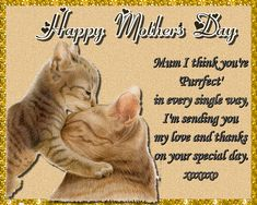 A sweet card for a purrfect mum this Mother's Day Free online Mum You're Purrfect ecards on Mother's Day Mother Day Wishes, Happy Mothers Day, Big Hugs For You, Warm Hug, Love Hug, Mum Birthday, Mom Day, Flower Quotes, Feeling Special