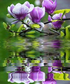 tulipánfa.gif Moving Pictures, Magnolia, Plants, Paisajes, Pictures, Lilac, Nature, Magnolias, Plant