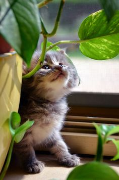 Kitten's little jungle. Cute Cats And Kittens, I Love Cats, Crazy Cats, Kittens Cutest, Beautiful Cats, Animals Beautiful, Cute Baby Animals, Animals And Pets, Animal Gato