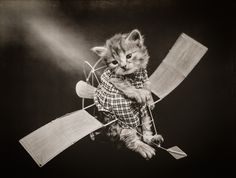 The Aviator with Cats, photographed by Harry Whittier Frees, June 24, 1914. Photograph shows a kitten wearing a dress placed inside a toy glider.