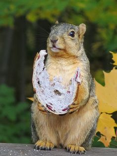 ♥ Thankful for my daily bread squirrel