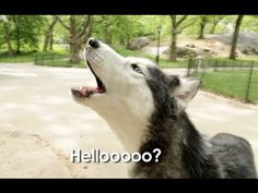 """*Mishka is Lost In Central Park! """" The one and only AMAZING Smart talented talking dog!****"""