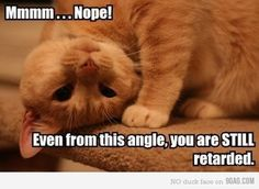 I'm pretty sure this is how our cat views us.