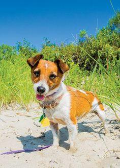 4098c35ab Dog friendly places to enjoy on the Jersey Shore. Photo by Joe Polillio   jerseyshore