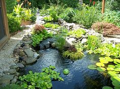 DIY water feature - i like the naturalness here, because of non-circular, non-kidney shape (ie an 'amoeba' shape) - also the mix of greenery, in and outside of water, and river rocks and gravel along some edges.