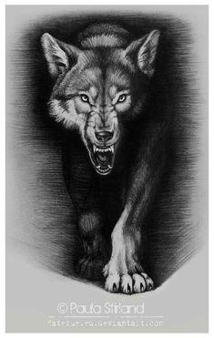 Tattoo wolf sketch skulls 53 ideas for 2019 - Tattoo wolf sketch skulls 53 ideas for 2019 You are in the right place about Tattoo wolf ske - Wolf Tattoos, Owl Skull Tattoos, Animal Tattoos, Wolf Tattoo Design, Tattoo Designs, Tattoo Ideas, Wolf Growling, Trucker Tattoo, Indian Headdress Tattoo