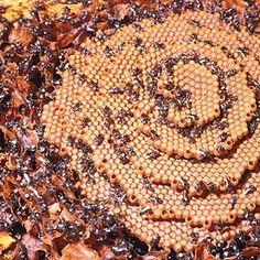 Stingless Beekeeping