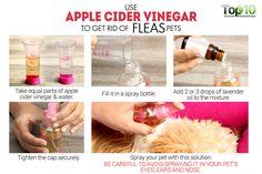 use apple cider vinegar to get rid of fleas