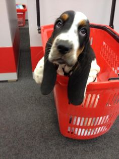 if only it was this easy to go buy an adorable basset