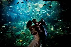 Seattle Aquarium Wedding Venue