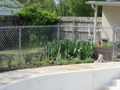 """This may be a bit hard to see but is my perrenial flower & stonecrop garden.  I planted my irises here to keep my dog out of them! When they grow enough I will divide them and plant more in """"riskier"""" areas where the pup might knock them over. There are a variety of stone crops and sedums growing in this area, as well, plus some other plants."""