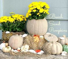 Beach House Fall with Sand Pumpkins - Coastal Decor Ideas Interior Design DIY Shopping Coastal Fall, Coastal Cottage, Coastal Decor, Small Beach Houses, Hampton Beach, Fall Home Decor, Beach House Decor, Fall Pumpkins, Fall Porches