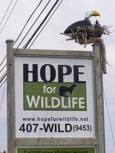A tour of the Hope for Wildlife Society facility in lovely Seaforth Nova Scotia Places Around The World, Around The Worlds, Wildlife Society, City By The Sea, Atlantic Canada, Cape Breton, Family Roots, Soul Searching, Beautiful Places To Travel