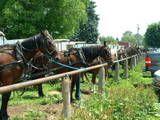 Amish hitching post, horses